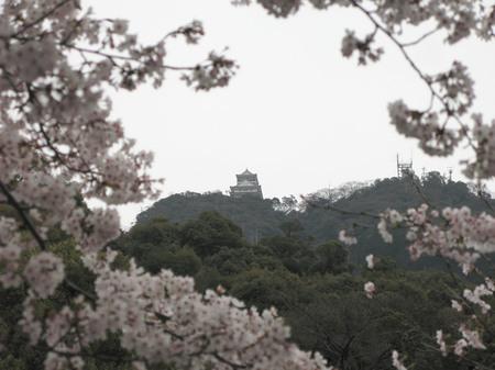 岐阜公園から岐阜城を臨む