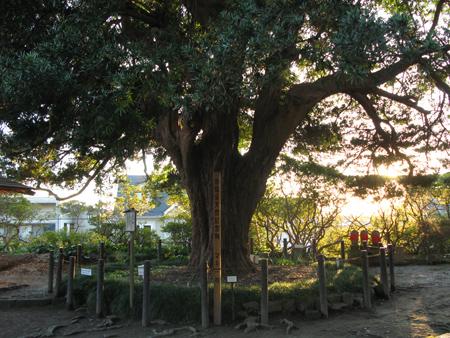安養院田代寺